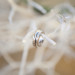 Elegant Wedding Rings at Villas Mar Azure in Ponce, PR thumbnail