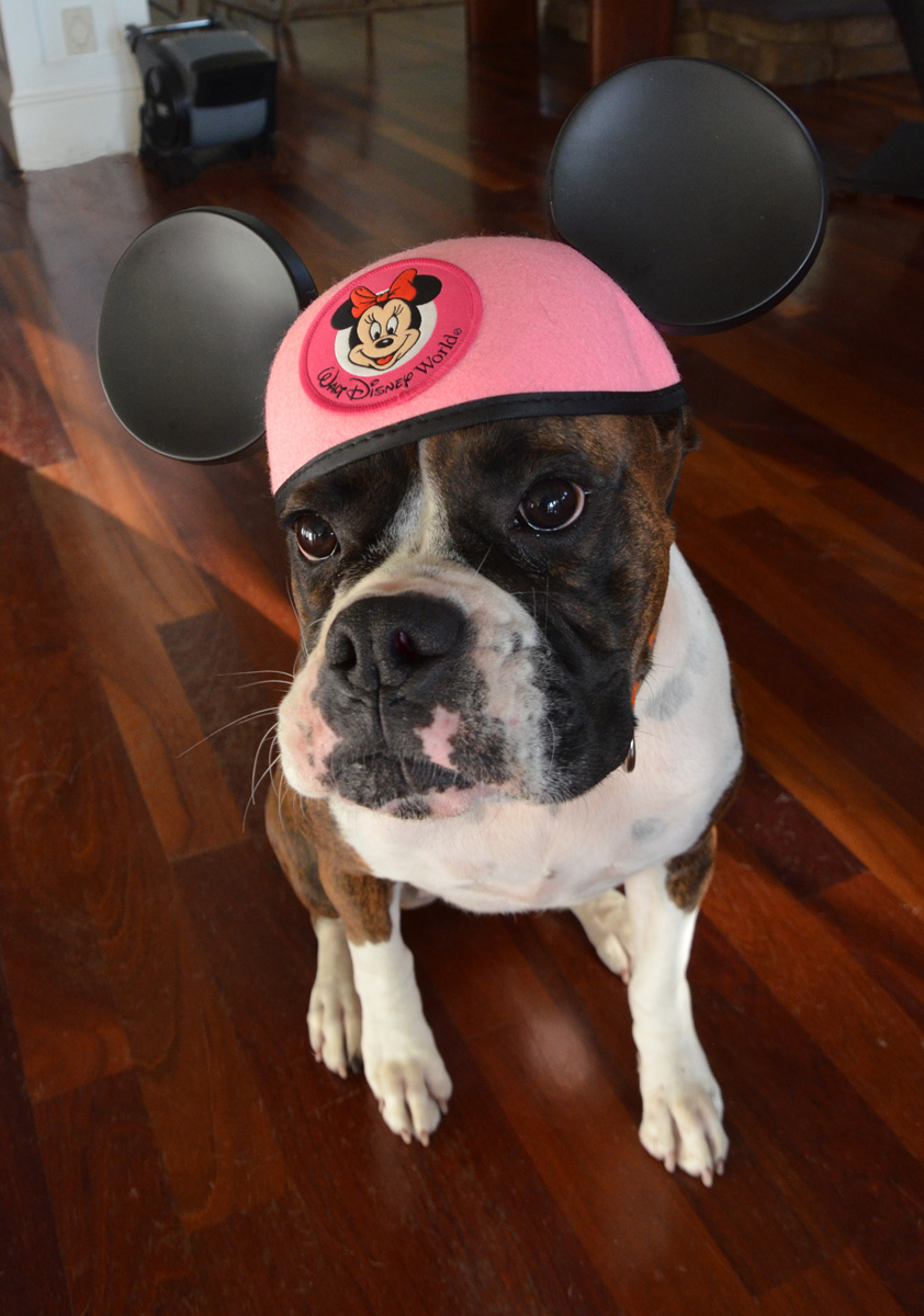 Dog Wearing Mickey Ears at a Disney Side Party | The Majestic Vision Wedding Planning | Palm Beach, FL | www.themajesticvision.com | Emily Allongo Photography