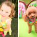 Adorable Flower Girl and Dog Ring Bearer in Sunglow First Impression Lilly Pulitzer at The Colony Hotel in Palm Beach, FL thumbnail